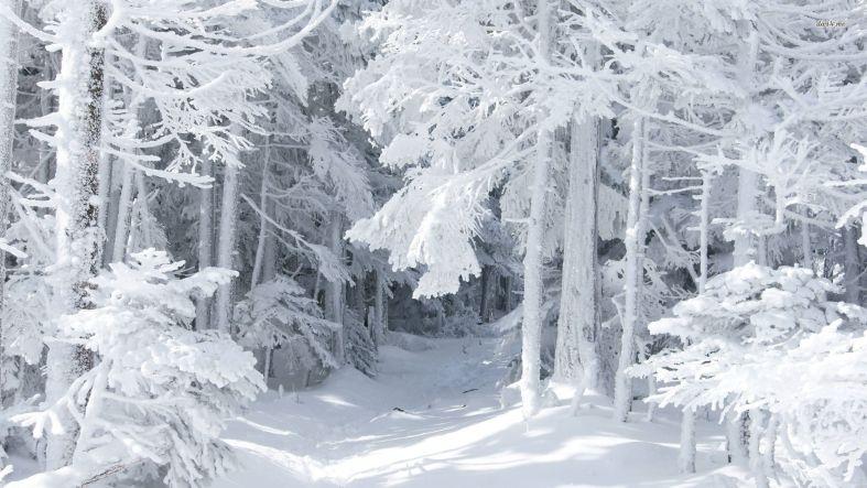 Blizzard метель вьюга близзард  обои и картинки на